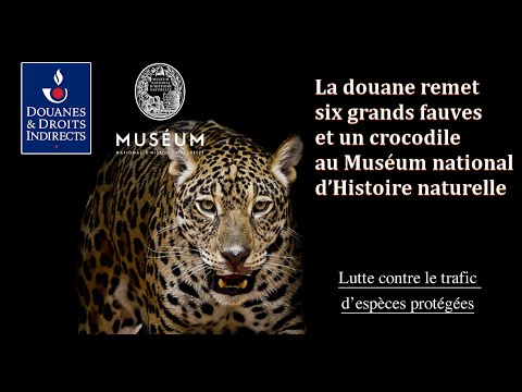Remise de six grands fauves et un crocodile au Muséum national d'Histoire naturelle