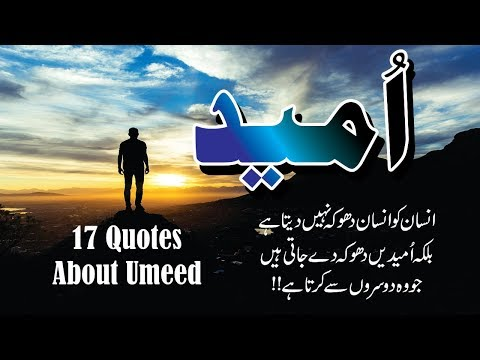 Umeed 17 Golden Quotes In Hindi Urdu With Voice And Images || Aqwal E Zareen Umeed