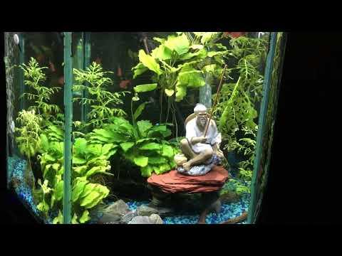 my-35-gallon-hex-aquarium-with-a-japanese-zen-garden-theme