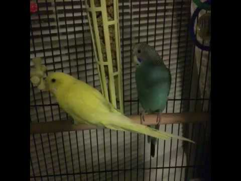 2 talking Birds part 3