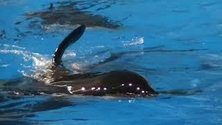 Wonder what orcas do at night - Jan 19 2018 - SeaWorld Orlando