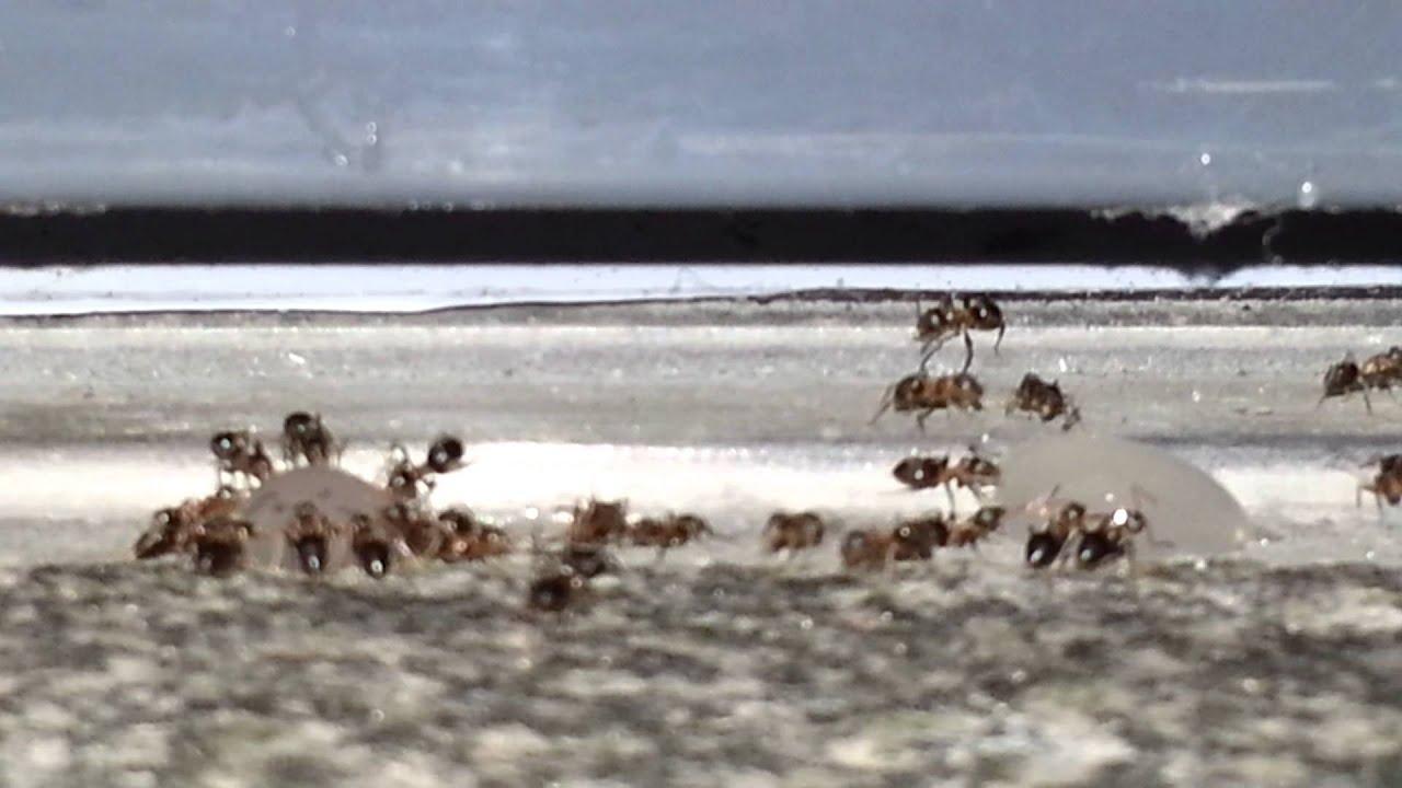 Ameisen In Küche | Bnbnews.co