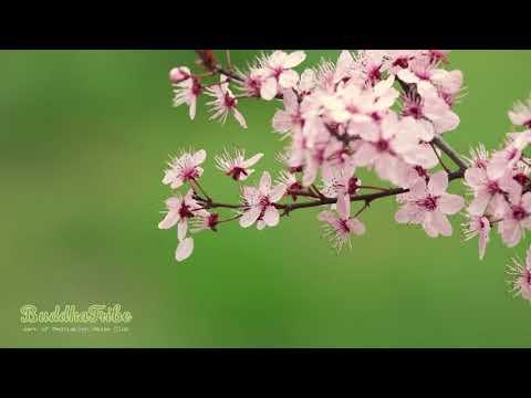 Meditation Music for Positive Energy: Meditation, Music for Positive Energy, Soft Sounds ☆BT2