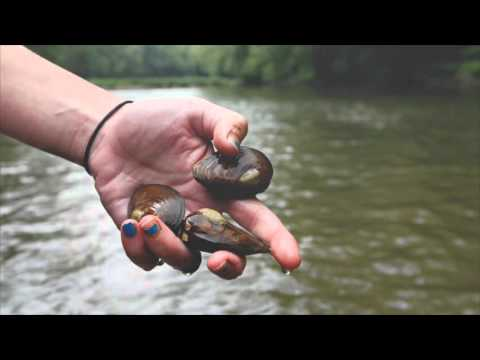 The Health Of The Big Darby Creek