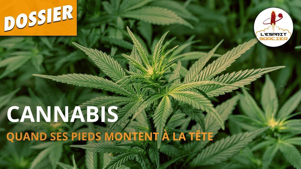 Cannabis Quand Ses Pieds Montent A La Tete Dossier 10 L