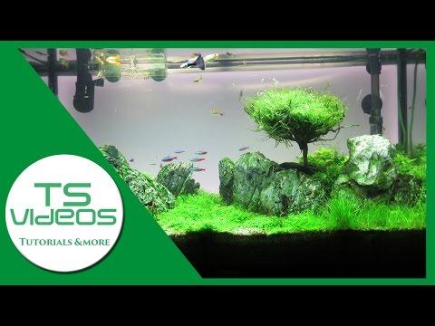 Mein neues Aquarium-Layout