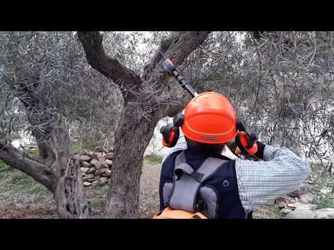PODA OLIVO JAÉN ALCAUDETE VÍDEO 12