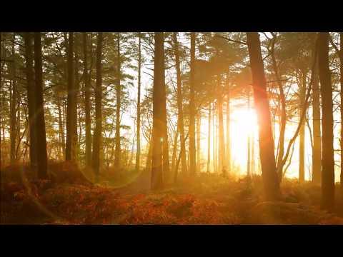 Bois Epais - Jean Baptiste Lully - instrumental