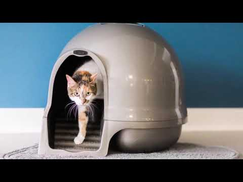 Petmate Clean Step Litter Dome Review