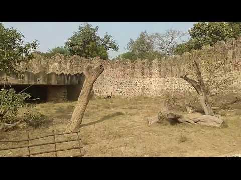 Delhi zoo. दिल्ली का चिड़ियाघर ( by Anurag aaryan)