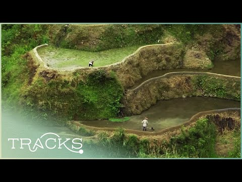 The Eighth Wonder of the World: Philippines' Rice Terraces & Its Farmers (Full Documentary) | TRACKS