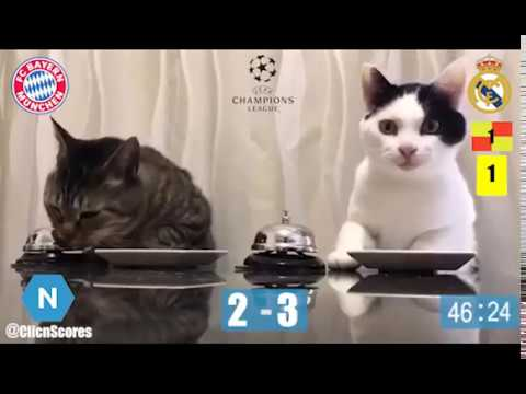 Champions League : Les chats pronostiquent Bayern Munich - Real Madrid (Parodie)