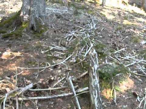 photo comment chercher des bois de cerf