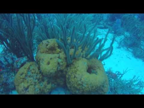 Aruba south coast reefs November 2015 part 1