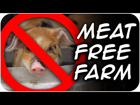 Meat FREE Farm - What is a vegetarian homestead? (28)