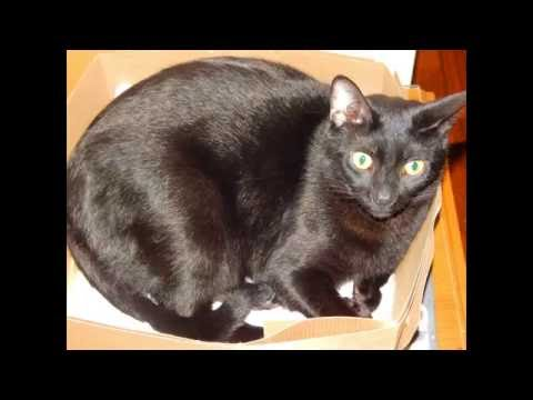 CAT IN A BOX Compilation ADORABLE KITTY CAT