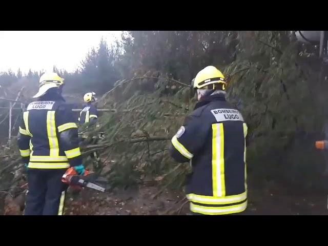 Retiran los árboles caídos de la pista que lleva a la Protectora