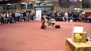 выставка собак Лидер ит 21.09.2014