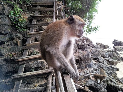 Monkey Trail from Centara Grand Beach Resort & Villas ...