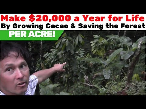 Make $20k a Year for Life & Save the Forest by Growing Choco