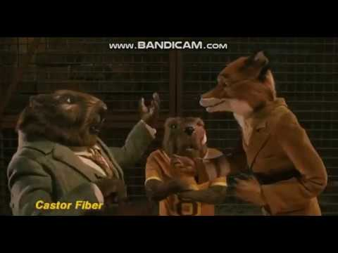 Fantastic Mr Fox Mr Fox Gives Out Latin Names Youtube