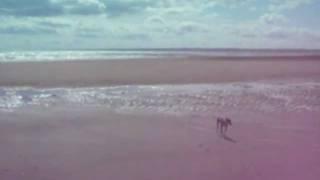 砂浜で暴走犬に変身する桜☆ そして・・・画面にちょこちょこ出てくる、...