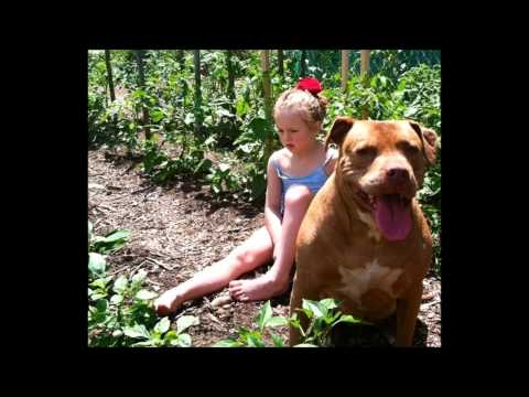Autistic Child And Pitbull: Inseperable Best Friends: Lacy&Karma