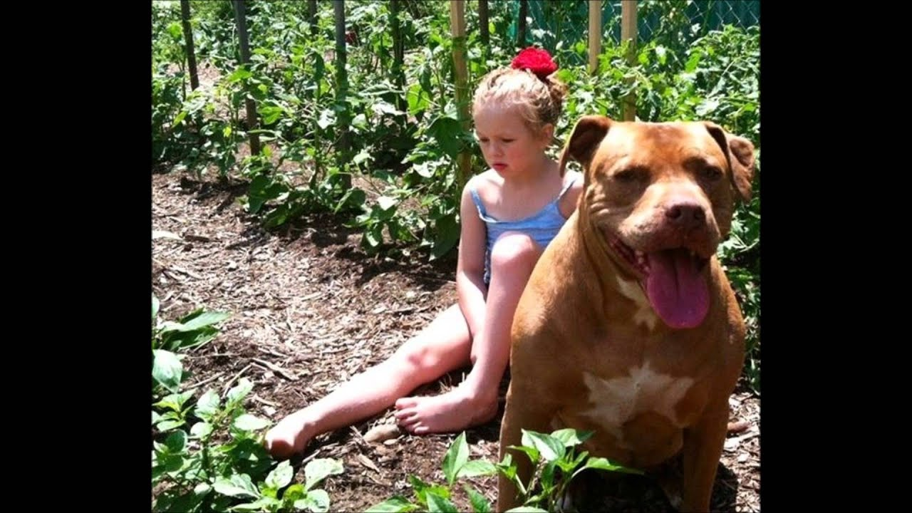 Best Dog Food For Baby Pitbull