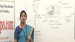 Albugo Lecture, BSc Botany by Dr. Ruby Singh Parmar.
