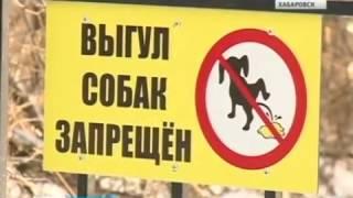 Вести-Хабаровск. Конфликт из-за выгула собак