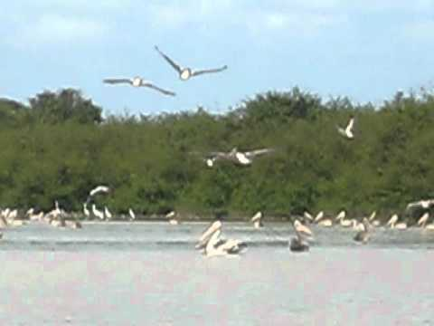 Cambodia Bird Watching Tours, Prek Toal Biosphere Reserve, Tonle Sap Great Lake