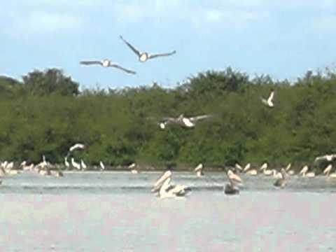 Cambodia Bird Watching Tours, Prek Toal Biosphere Reserve, Tonle Sap Great Lake