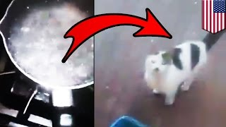 Animal abuse video: Man pours boiling hot water on cat, pisses off absolutely everyone - TomoNews