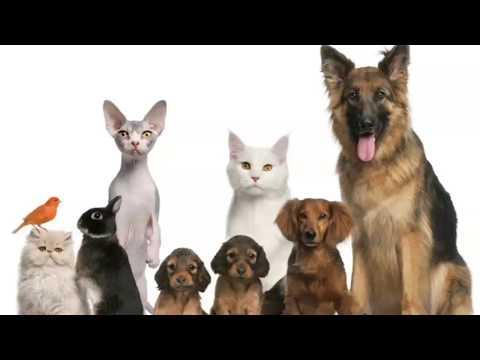 روائع القطط والكلاب - Cats and Dogs