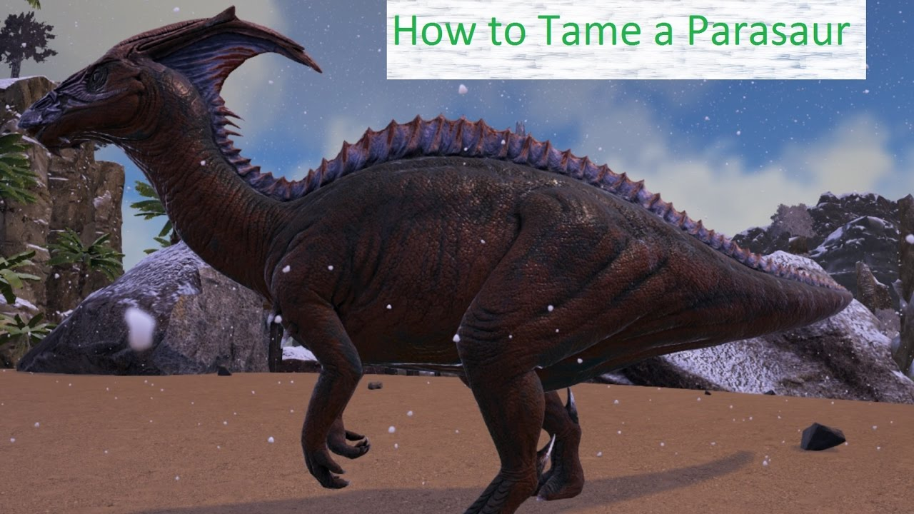How To Tame A Parasaur Ark Survival Evolved Early Game Guide Youtube I'm pretty sure it's the same way of taming as a regular parasaur, just the typical tranq method. how to tame a parasaur ark survival evolved early game guide