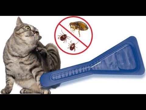 Как понять что у кошки блохи? Как вылечить кошку от блох?