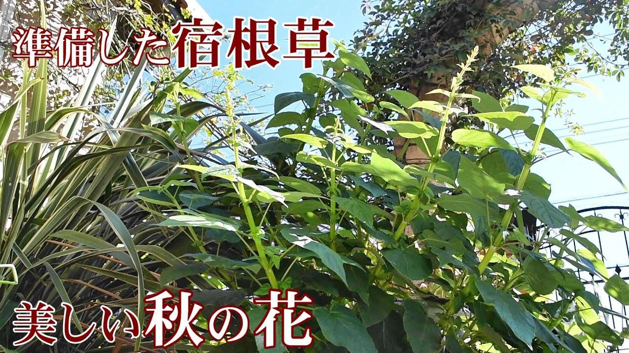 に 咲く 宿根草 秋