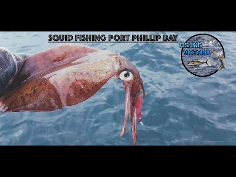 Squid Fishing Port Phillip Bay