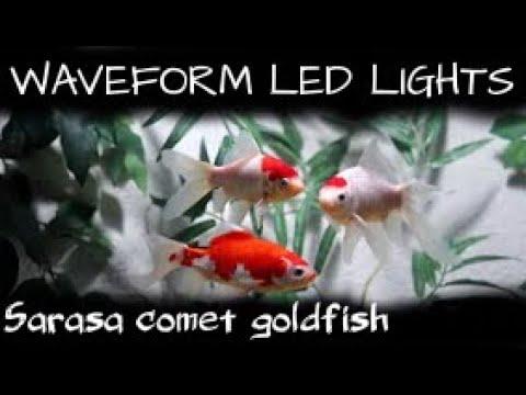WAVEFORM LED LIGHTS Sarasa Comet Goldfish