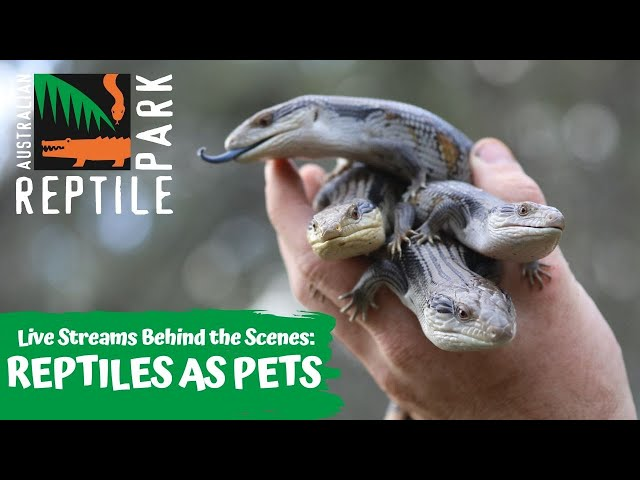 REPTILES AS PETS   AUSTRALIAN REPTILE PARK