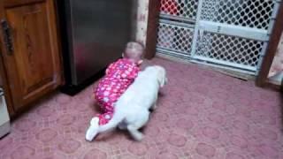 White Golden Retriever Puppy By Golden Lightning