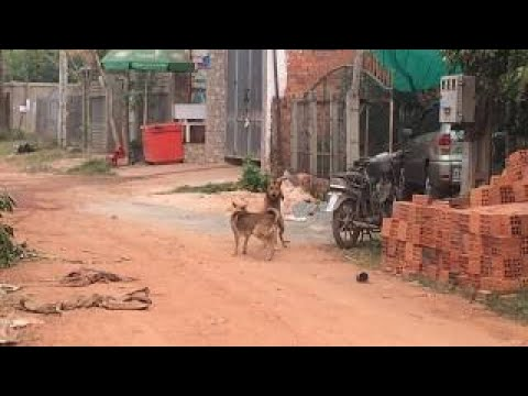 The Street Dogs Meeting Group In My Village