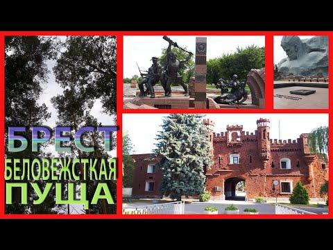 вояж из Минска в Брест (Беловежская пуща)
