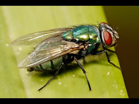 Top 10 Fastest Insect Wings on Earth