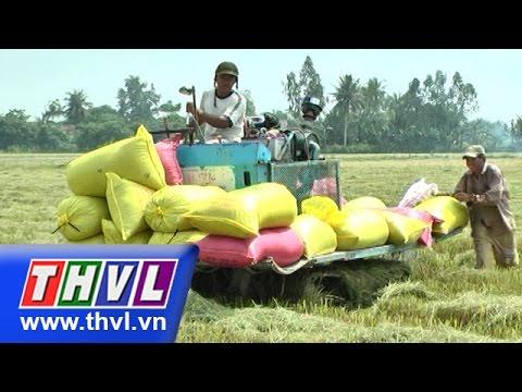 THVL | Thời sự 11h (22/9/2015)
