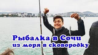 Рыбалка в Сочи - ставрида с катера - куда сходить в Сочи - VO Time