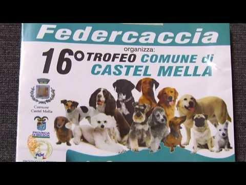 Esposizione Canina 16° Trofeo Comune di Castelmella (BS)