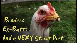 Broilers, Ex-Batts and a VERY Strict Diet | Chicken Check-In with E17 Hens