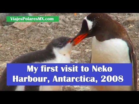 Neko Harbour Antarctica 2008 my first visit