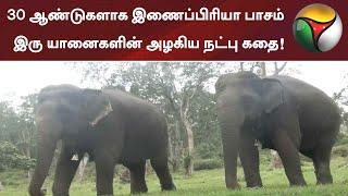 30 ஆண்டுகளாக இணைப்பிரியா பாசம் - இரு யானைகளின் அழகிய நட்பு கதை! | Elephant